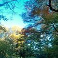 都心の紅葉も終盤だよ #新宿御苑