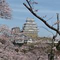 桜の下は花見客