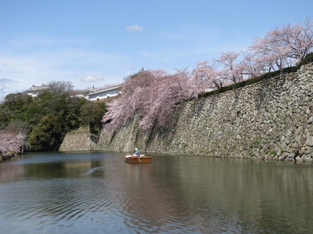 Photos: 小舟と桜