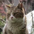 写真: ある日のねえ様(2)