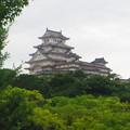 夏の姫路城