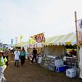 Photos: 座間 ひまわり_251