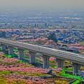 桃の花とリニアモーターカー