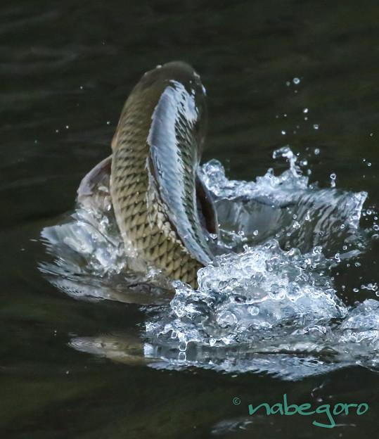 季節外れの鯉のぼり