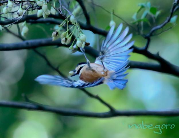 Photos: acrobat
