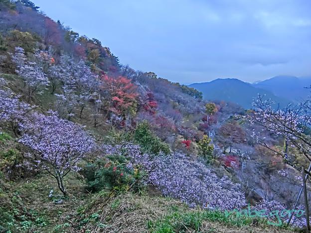 桜山公園-2
