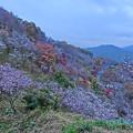 写真: 桜山公園-2