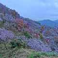 Photos: 桜山公園-2