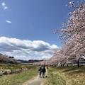 Photos: こだま千本桜