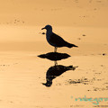 Photos: silhouette