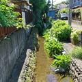 野川の歩き撮り_7