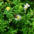 野川公園の虫ー2