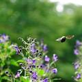 野川公園の虫ー3