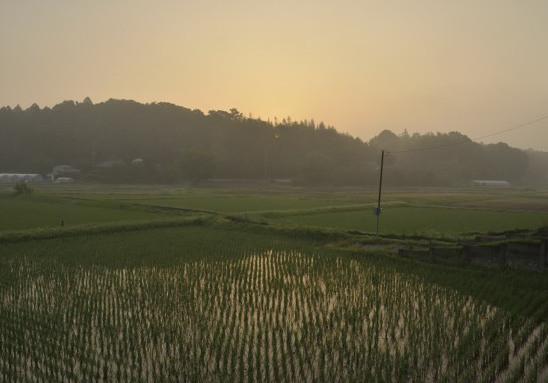 朝もやの田園