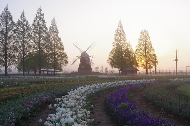写真: あけぼの山の朝