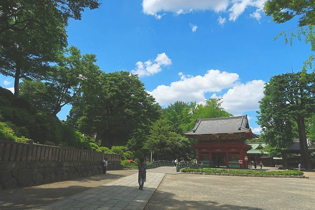 写真: 根津神社20180601
