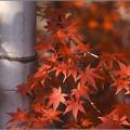 Photos: 竹に寄り添う