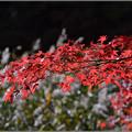 Photos: 秋風に