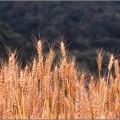 Photos: harvest