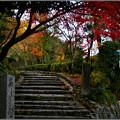 Photos: 化野の露