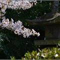 写真: 春に待つ