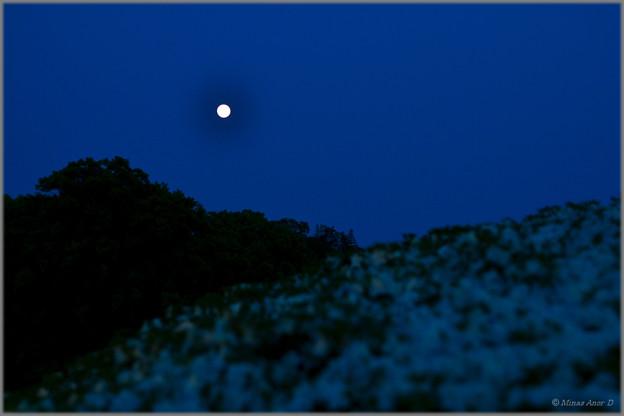 写真: 月つつじ