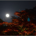 月に寄せる