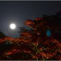 写真: 月に寄せる