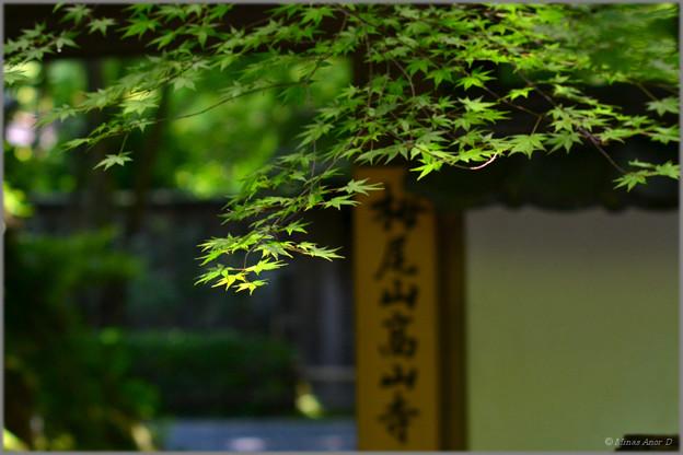 Photos: 風の木