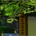 写真: 風の木