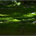 写真: 苔むす