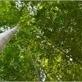 写真: 竹林の風