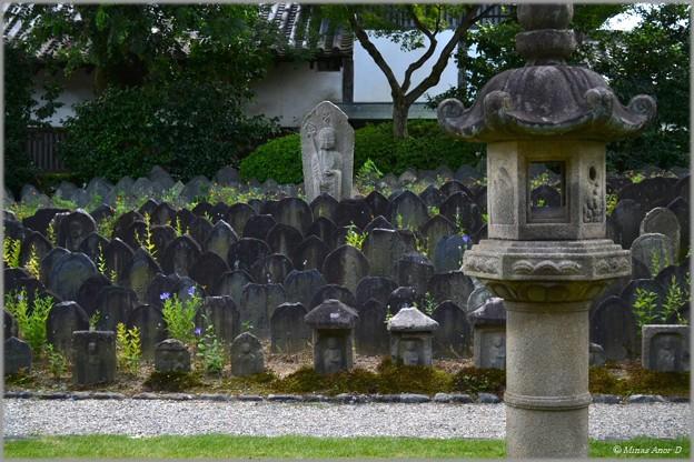 Photos: あきの気配