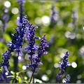 写真: 花の露