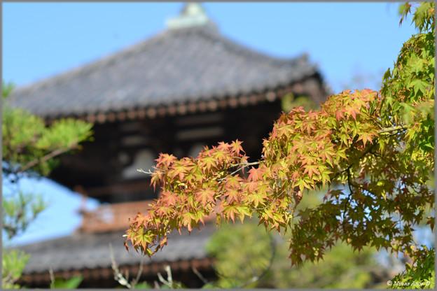 Photos: 初秋