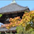 写真: 初秋