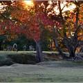 写真: 鹿のいる夕暮れ