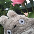 pink rose &ととろ (o^―^o)