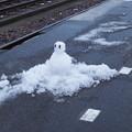 写真: 近江塩津駅の写真0051