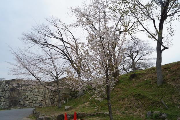 姫路城の写真0205