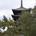 Photos: 冬の奈良市内の写真0010