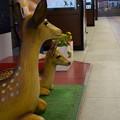 写真: 近鉄奈良駅の写真0003