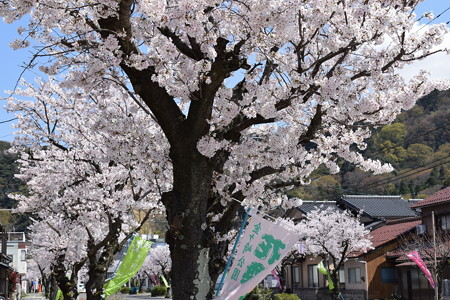敦賀市内の写真0188