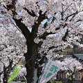 Photos: 敦賀市内の写真0188