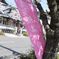 Photos: 敦賀市内の写真0189