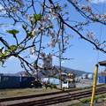 Photos: 敦賀市内の写真0192