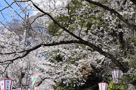 敦賀市内の写真0199