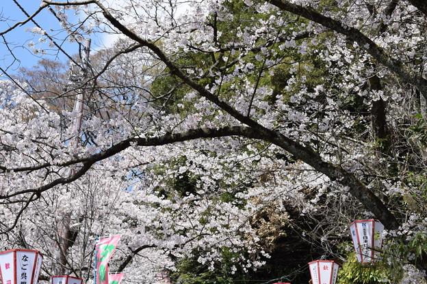 Photos: 敦賀市内の写真0199