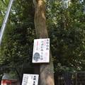 Photos: 神戸市内の写真0026