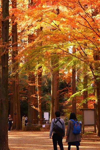 秋色に染まる並木道を
